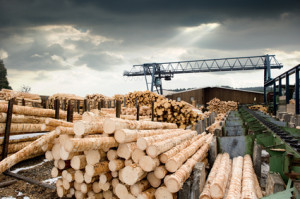 Green lumber fallacy